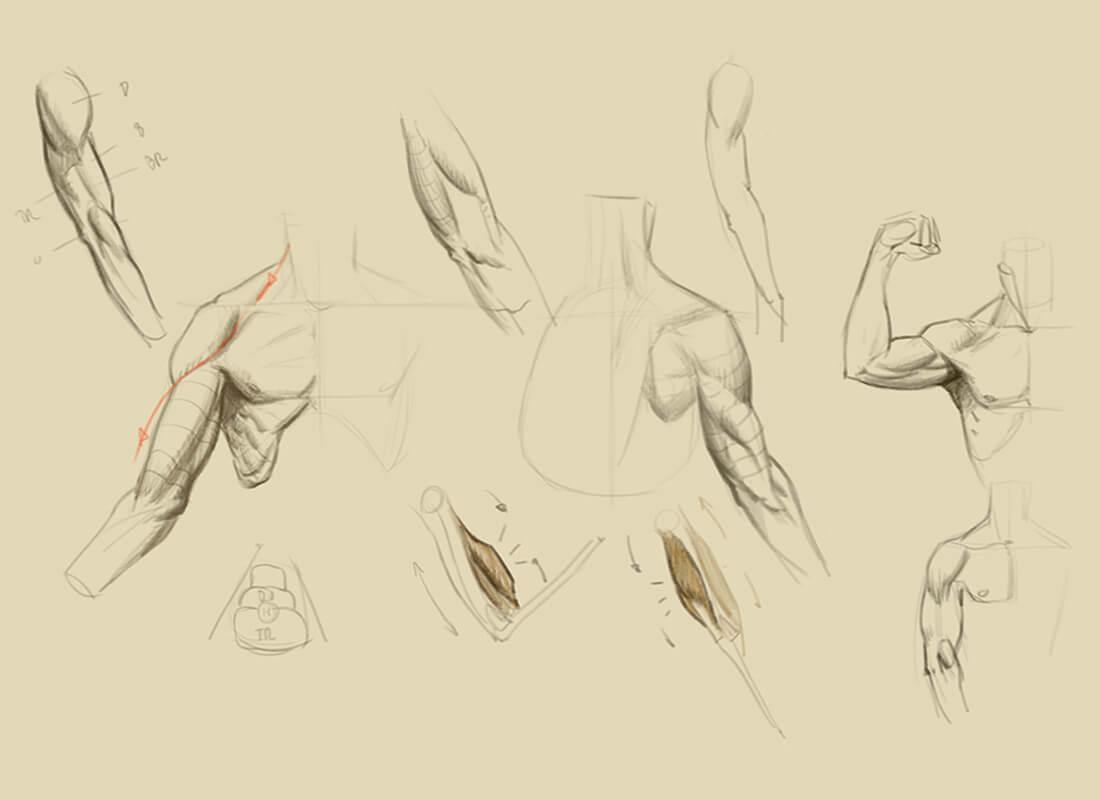 Anatomía Artística y dibujo estructural | Diego Catalán